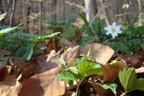 Pregedate slike iz članka: Proljeće se budi (galerija)